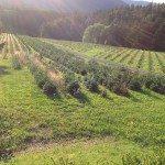 Alsace juillet 2014_0011 auderset