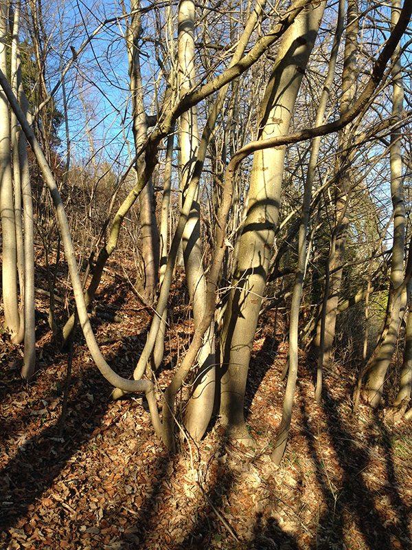 En bas de la forêt, à l'entrée du chemin à gauche...