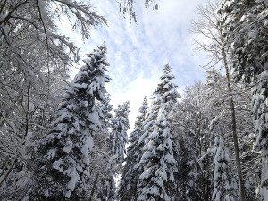 neige Mt-So_2 petit