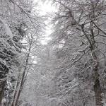 neige foret_0009 pt