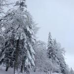 neige_0006 PT