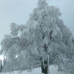 neige_0009 PT
