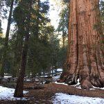 sequoia ocpt